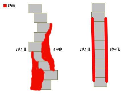 モデル体型 骨盤バーチカル 骨盤垂直 関節角度 骨盤リセット 骨盤前傾 骨盤後傾 シェイプス Shapes